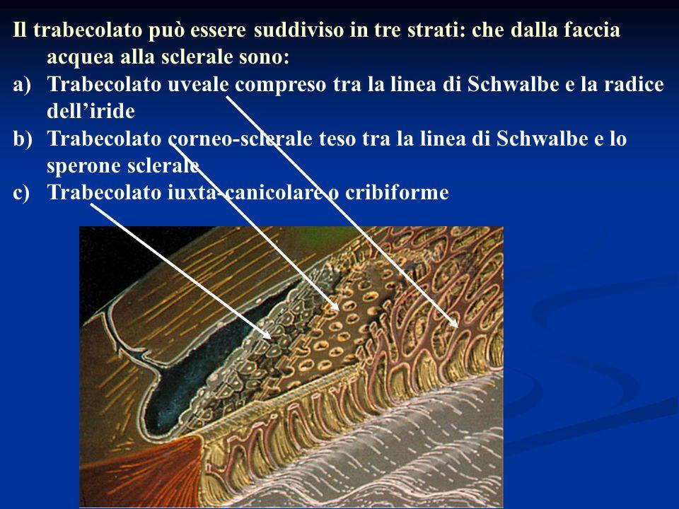 Il trabecolato può essere suddiviso in tre strati: che dalla faccia acquea alla sclerale sono: