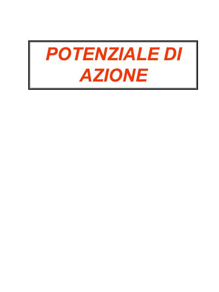 POTENZIALE DI AZIONE