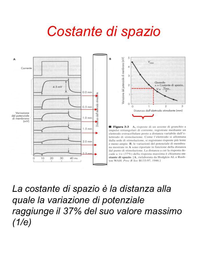 Costante di spazio La costante di spazio è la distanza alla quale la variazione di potenziale raggiunge il 37% del suo valore massimo (1/e)
