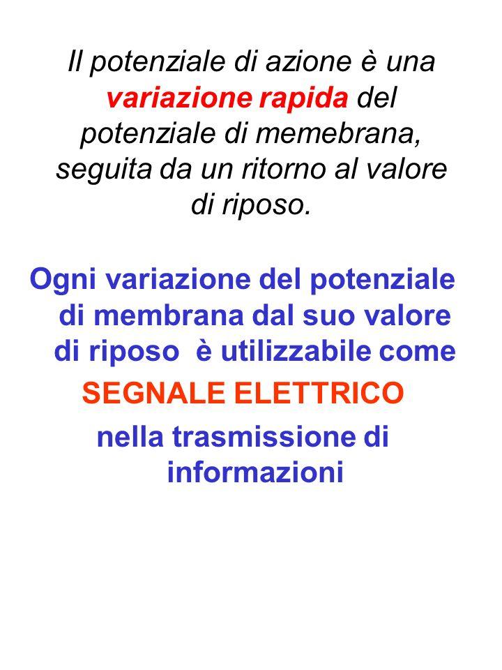 nella trasmissione di informazioni