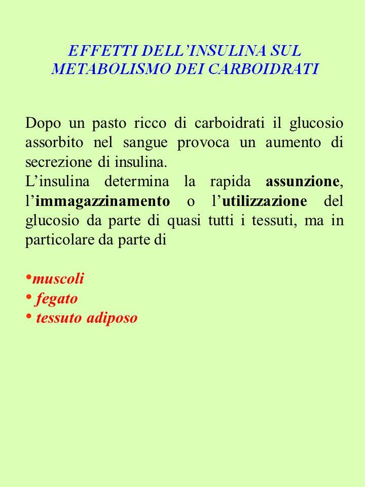Dopo un pasto ricco di carboidrati il glucosio assorbito nel sangue provoca un aumento di secrezione di insulina.