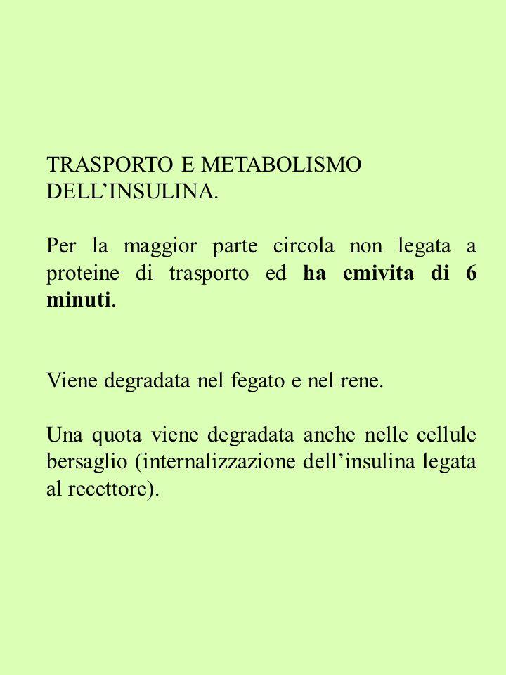 TRASPORTO E METABOLISMO DELL'INSULINA.