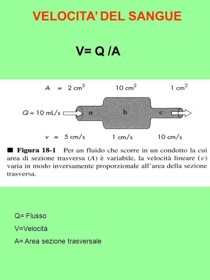 VELOCITA' DEL SANGUE V= Q /A