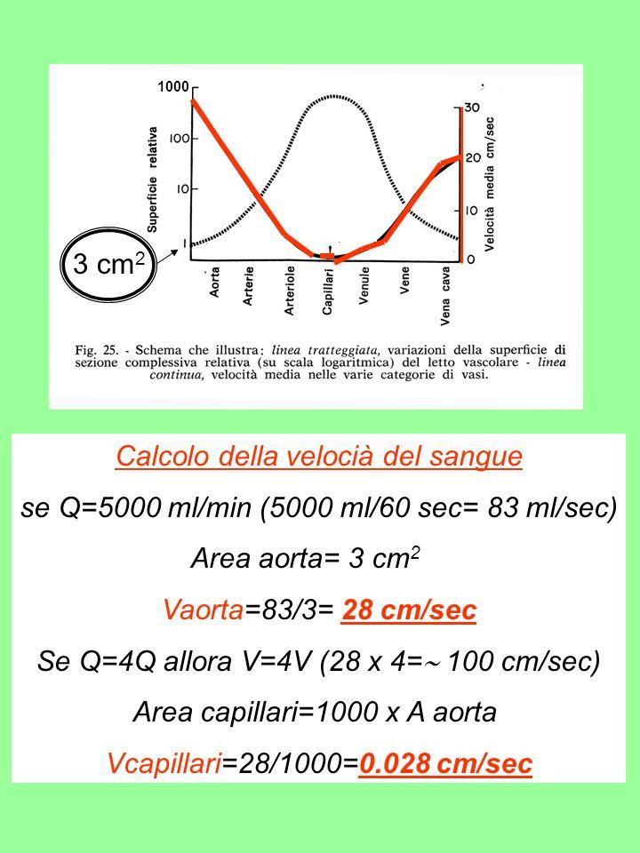 Calcolo della velocià del sangue
