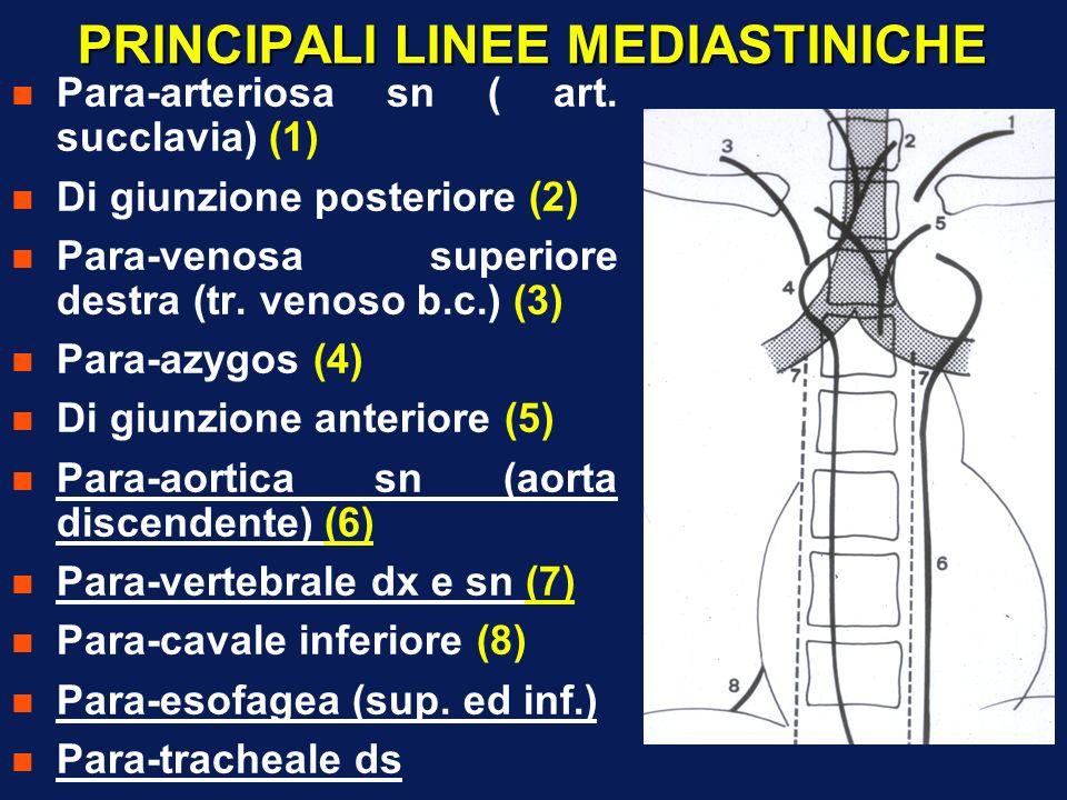 PRINCIPALI LINEE MEDIASTINICHE