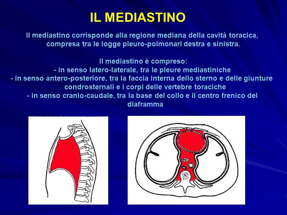 IL MEDIASTINO Il mediastino corrisponde alla regione mediana della cavità toracica, compresa tra le logge pleuro-polmonari destra e sinistra.