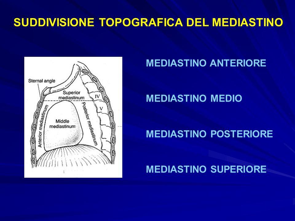 SUDDIVISIONE TOPOGRAFICA DEL MEDIASTINO