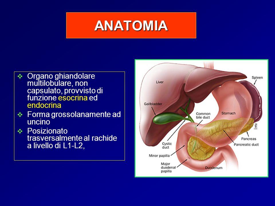 ANATOMIA Organo ghiandolare multilobulare, non capsulato, provvisto di funzione esocrina ed endocrina.