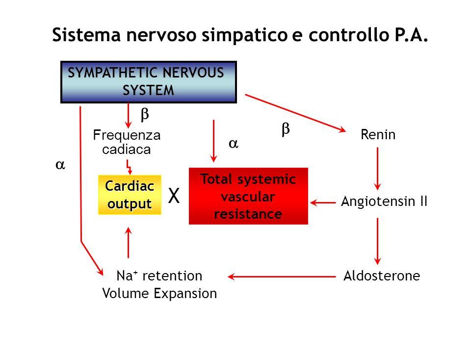 X Sistema nervoso simpatico e controllo P.A.    