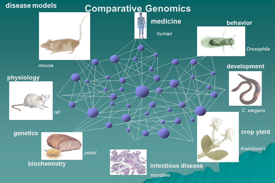Comparative Genomics disease models medicine behavior development