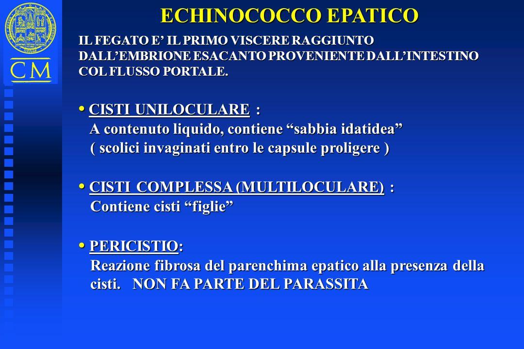 ECHINOCOCCO EPATICO • CISTI UNILOCULARE :