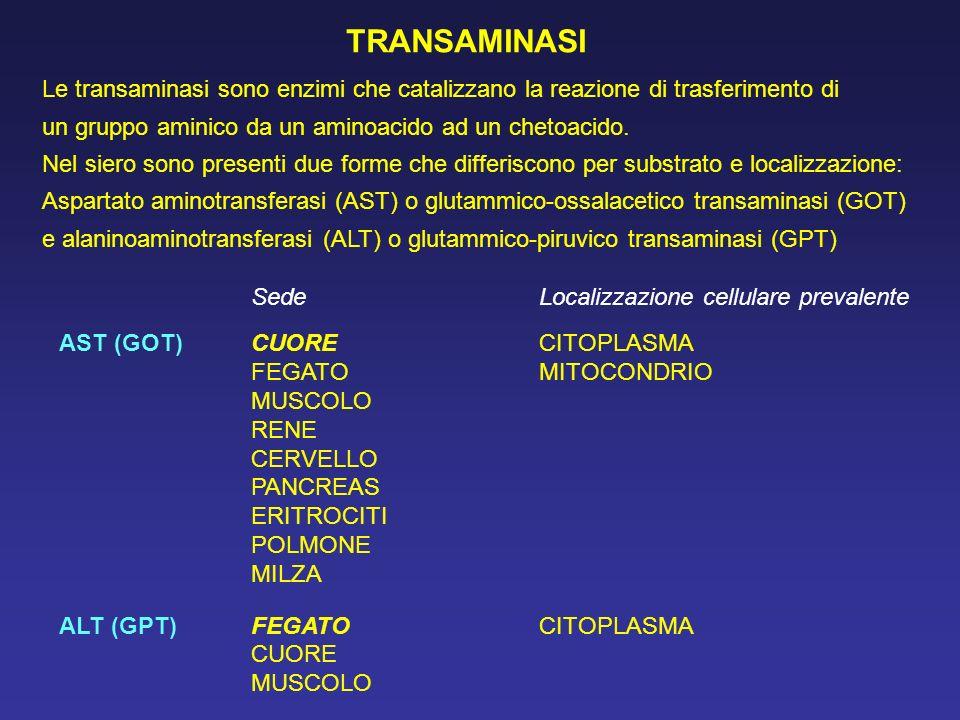 TRANSAMINASI Le transaminasi sono enzimi che catalizzano la reazione di trasferimento di. un gruppo aminico da un aminoacido ad un chetoacido.