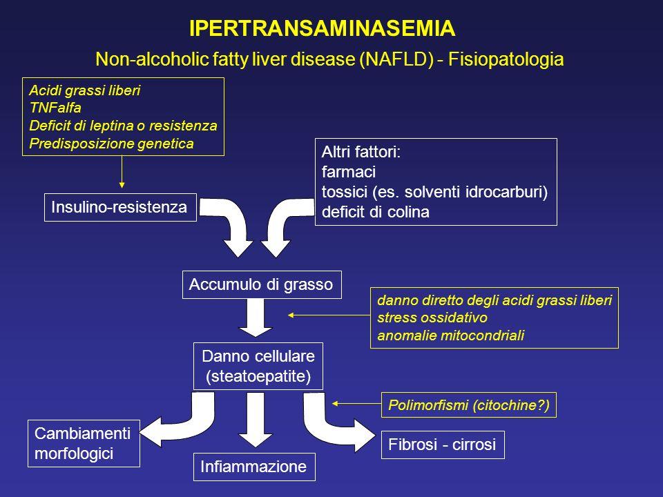 IPERTRANSAMINASEMIA Non-alcoholic fatty liver disease (NAFLD) - Fisiopatologia. Acidi grassi liberi.