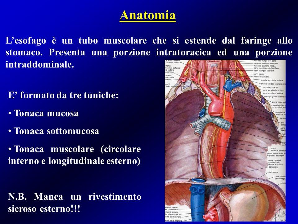 Anatomia L'esofago è un tubo muscolare che si estende dal faringe allo stomaco. Presenta una porzione intratoracica ed una porzione intraddominale.