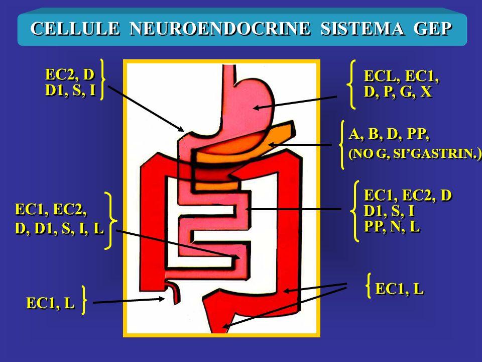 CELLULE NEUROENDOCRINE SISTEMA GEP