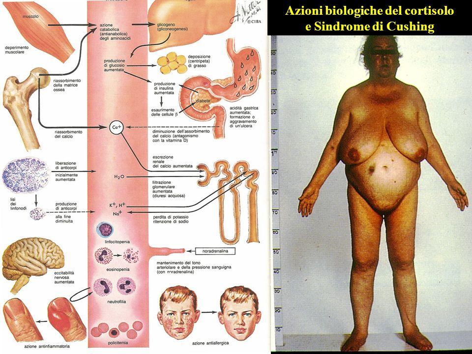 Azioni biologiche del cortisolo