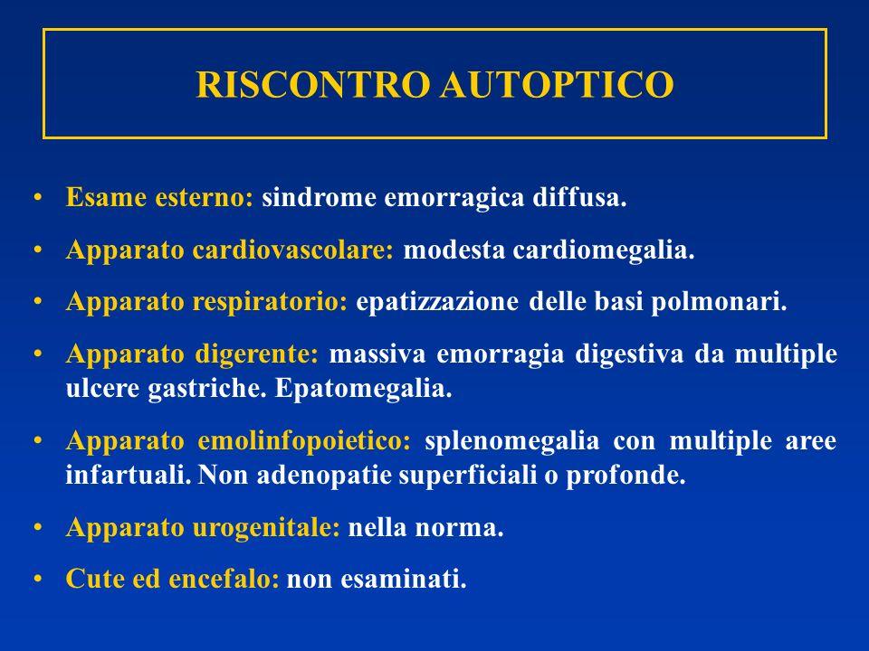 RISCONTRO AUTOPTICO Esame esterno: sindrome emorragica diffusa.