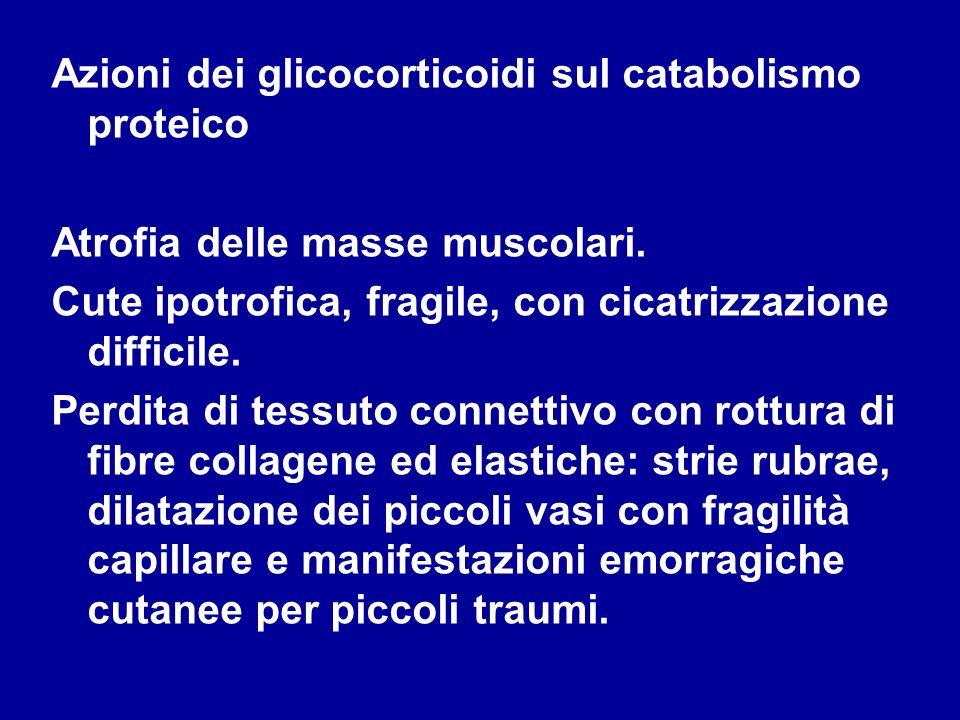 Azioni dei glicocorticoidi sul catabolismo proteico