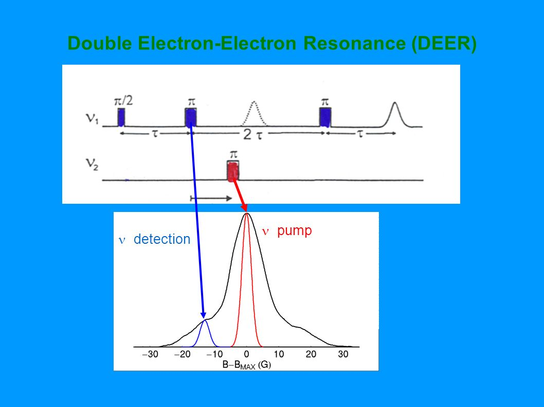 Double Electron-Electron Resonance (DEER)
