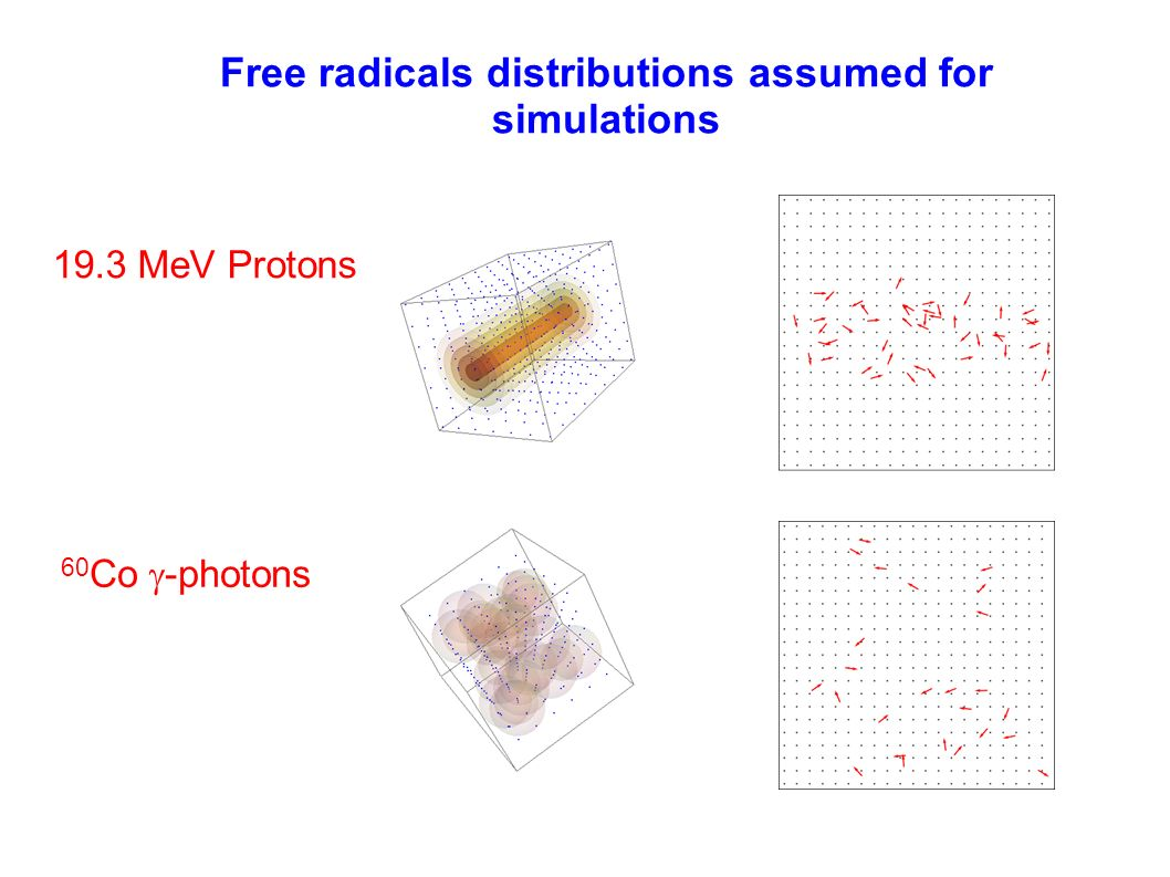 Free radicals distributions assumed for simulations