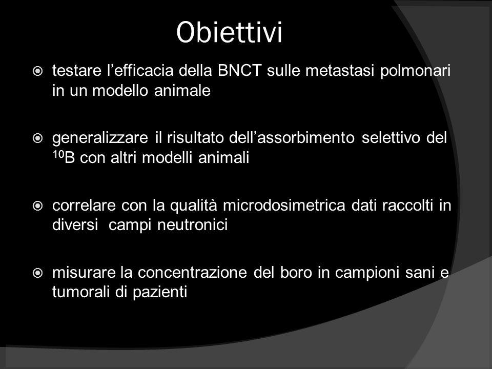 Obiettivi testare l'efficacia della BNCT sulle metastasi polmonari in un modello animale.