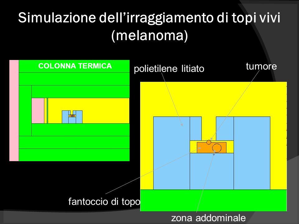 Simulazione dell'irraggiamento di topi vivi (melanoma)