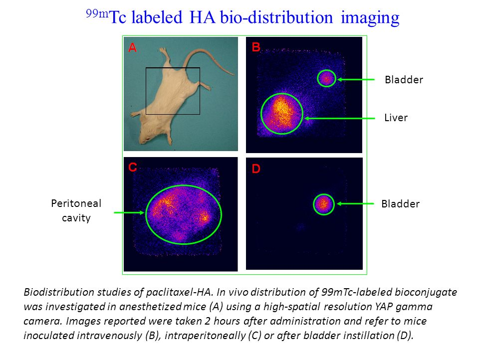 99mTc labeled HA bio-distribution imaging