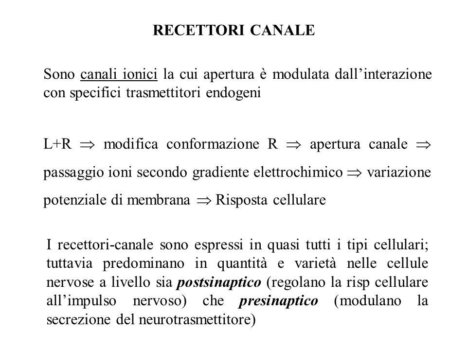 RECETTORI CANALE Sono canali ionici la cui apertura è modulata dall'interazione con specifici trasmettitori endogeni.