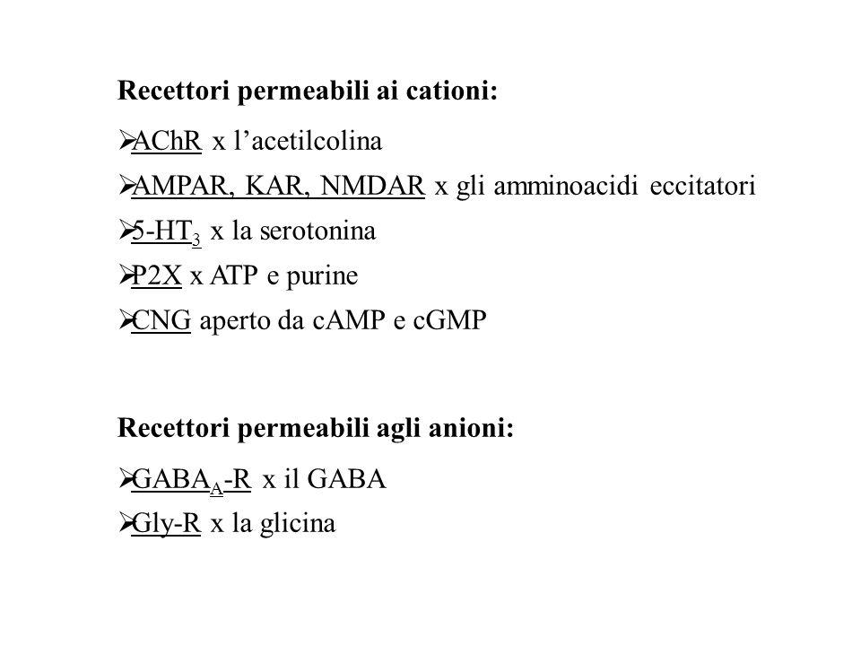 Recettori permeabili ai cationi: