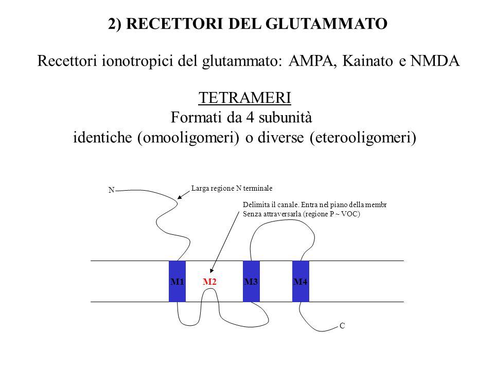 2) RECETTORI DEL GLUTAMMATO