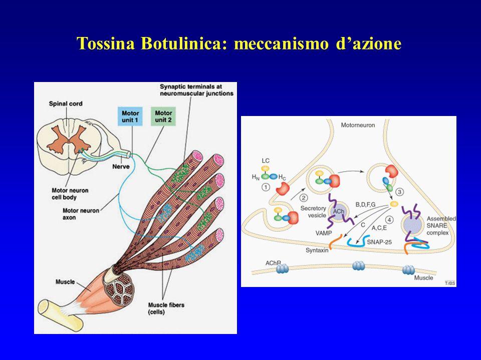 Tossina Botulinica: meccanismo d'azione