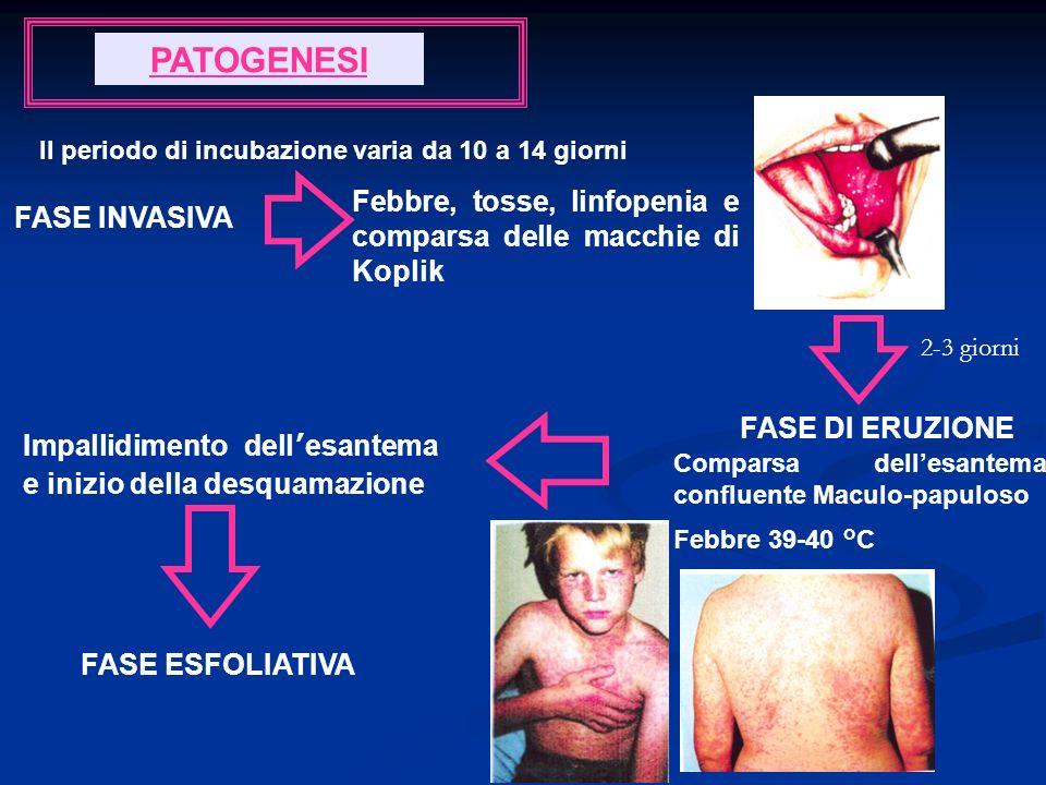 PATOGENESI Il periodo di incubazione varia da 10 a 14 giorni. Febbre, tosse, linfopenia e comparsa delle macchie di Koplik.