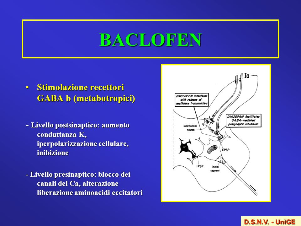 S P A S T I C I T Y Motor disorder characterized by  ~ Baclofen Withdrawal Symptoms