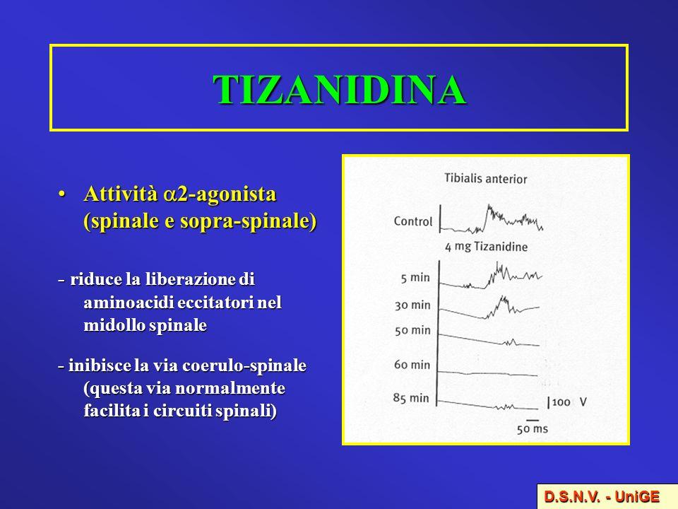 TIZANIDINA Attività 2-agonista (spinale e sopra-spinale)