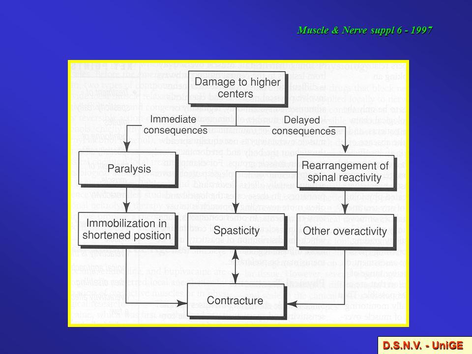 Muscle & Nerve suppl 6 - 1997 D.S.N.V. - UniGE