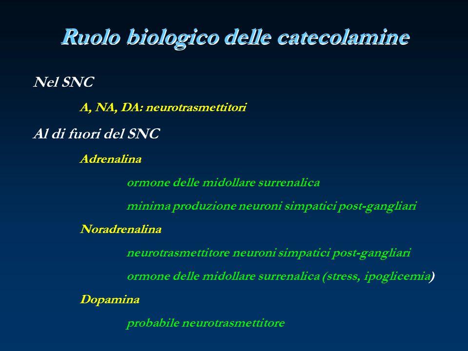 Ruolo biologico delle catecolamine