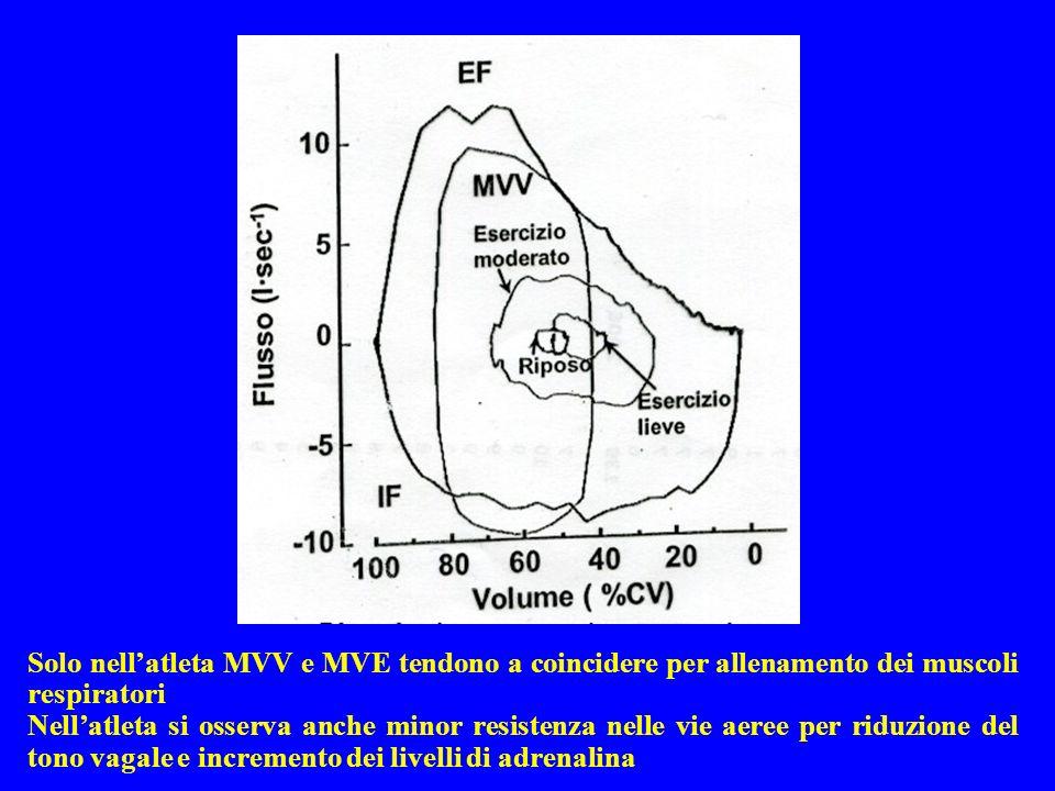 Solo nell'atleta MVV e MVE tendono a coincidere per allenamento dei muscoli respiratori