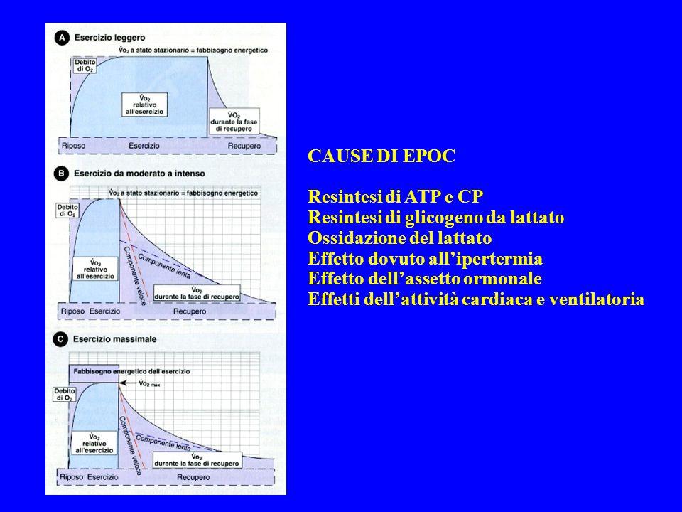 CAUSE DI EPOC Resintesi di ATP e CP. Resintesi di glicogeno da lattato. Ossidazione del lattato. Effetto dovuto all'ipertermia.