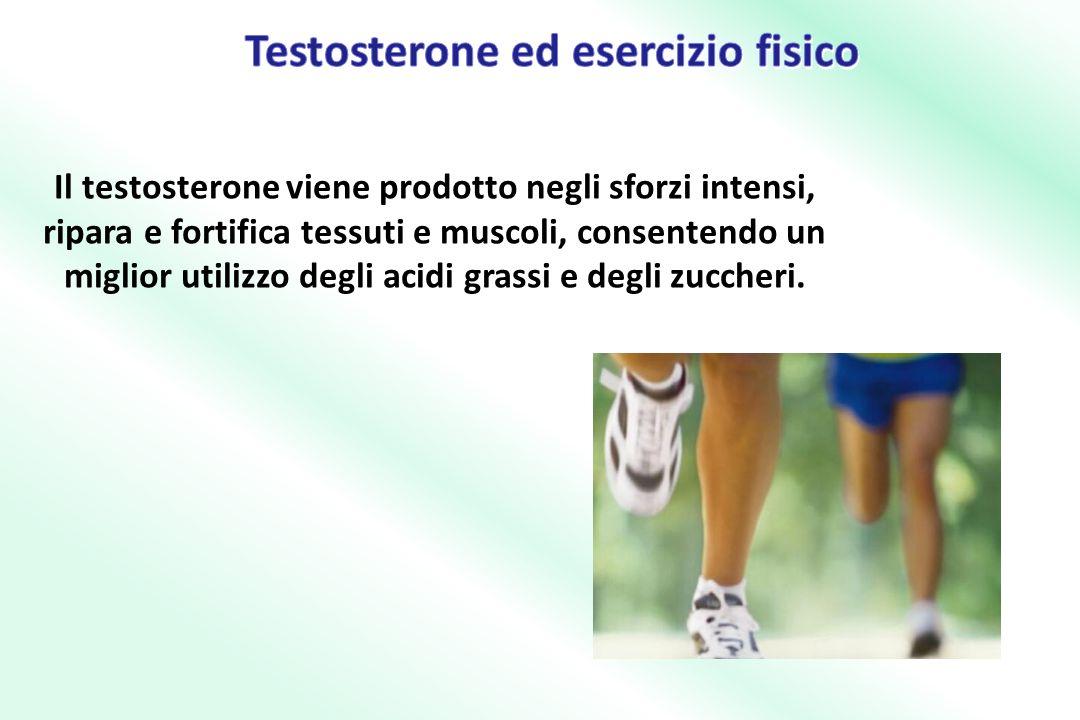 Testosterone ed esercizio fisico