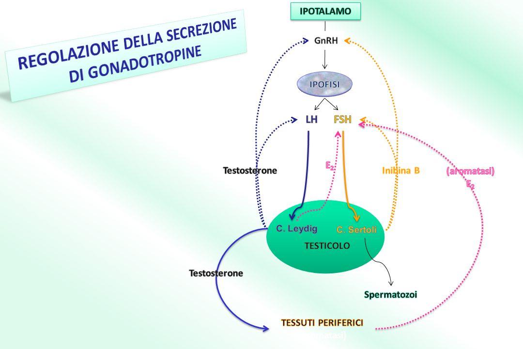 REGOLAZIONE DELLA SECREZIONE TESSUTI PERIFERICI (aromatasi)