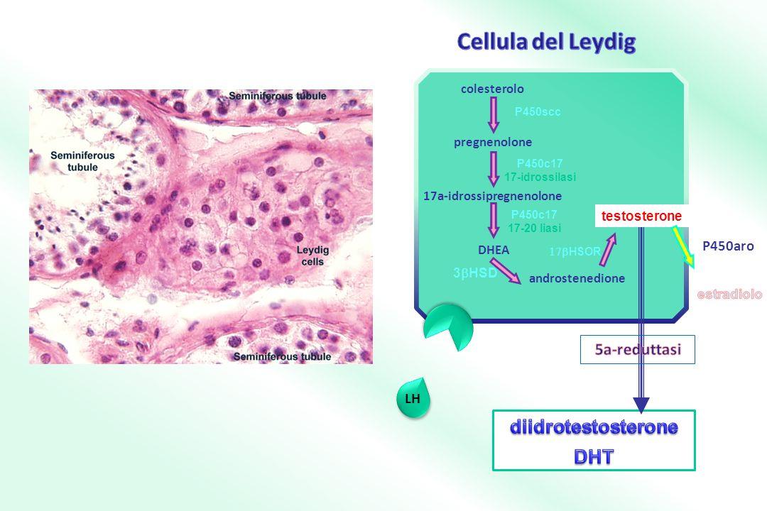 17a-idrossipregnenolone