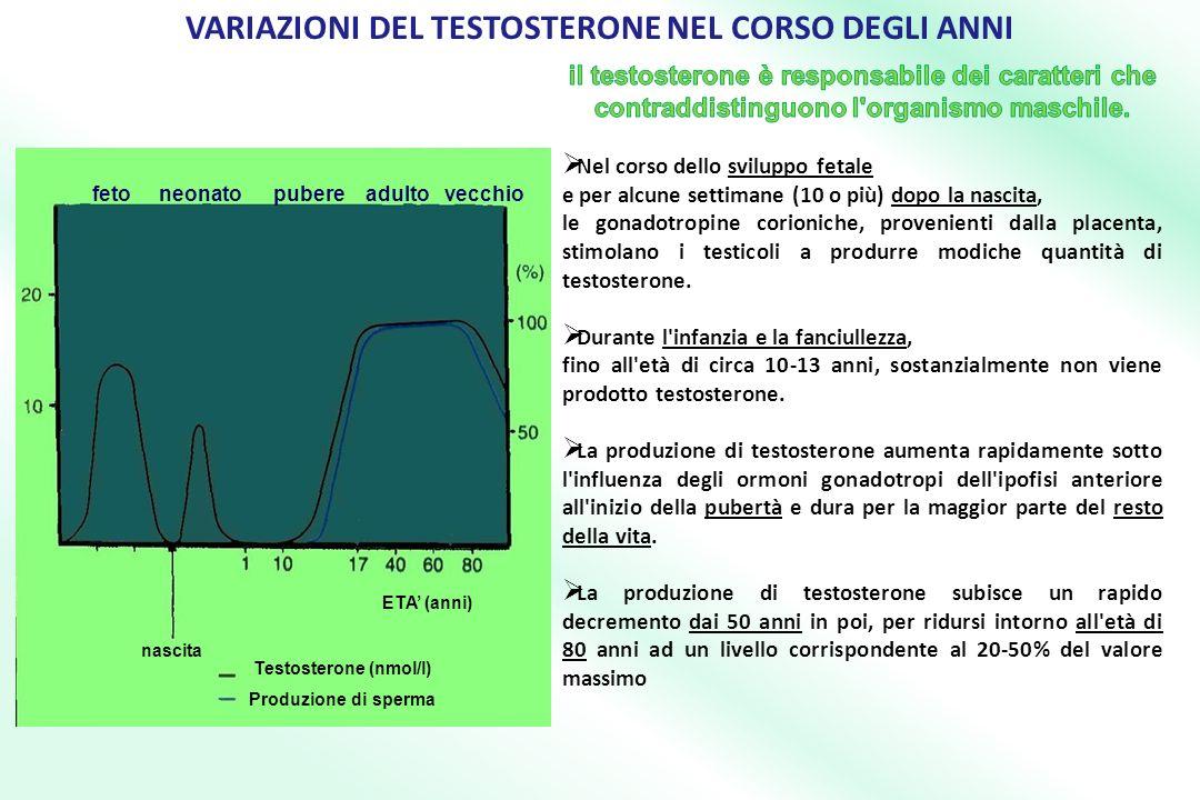VARIAZIONI DEL TESTOSTERONE NEL CORSO DEGLI ANNI