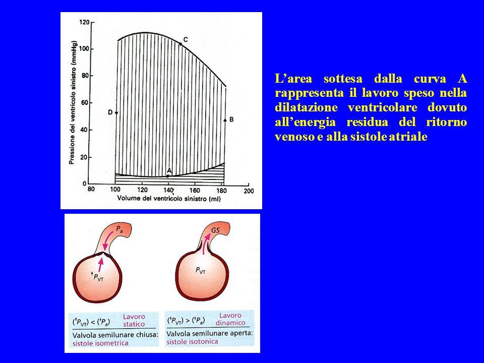 L'area sottesa dalla curva A rappresenta il lavoro speso nella dilatazione ventricolare dovuto all'energia residua del ritorno venoso e alla sistole atriale