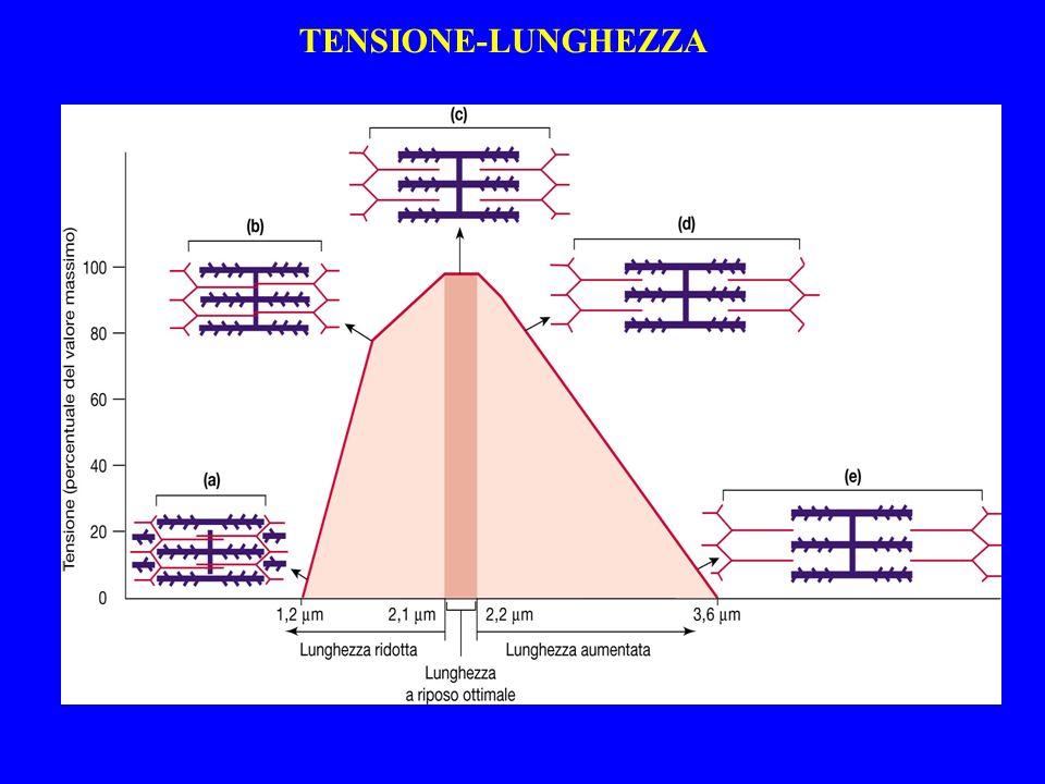 TENSIONE-LUNGHEZZA