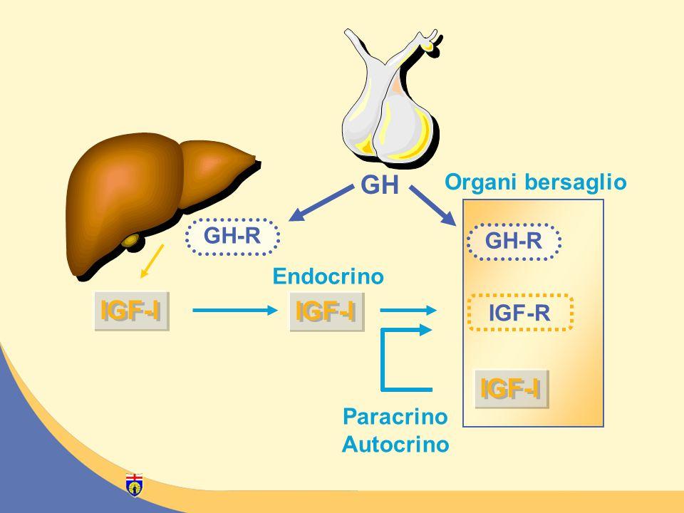 GH IGF-I IGF-I IGF-I Organi bersaglio GH-R GH-R Endocrino IGF-R