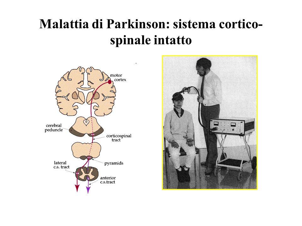 Malattia di Parkinson: sistema cortico-spinale intatto