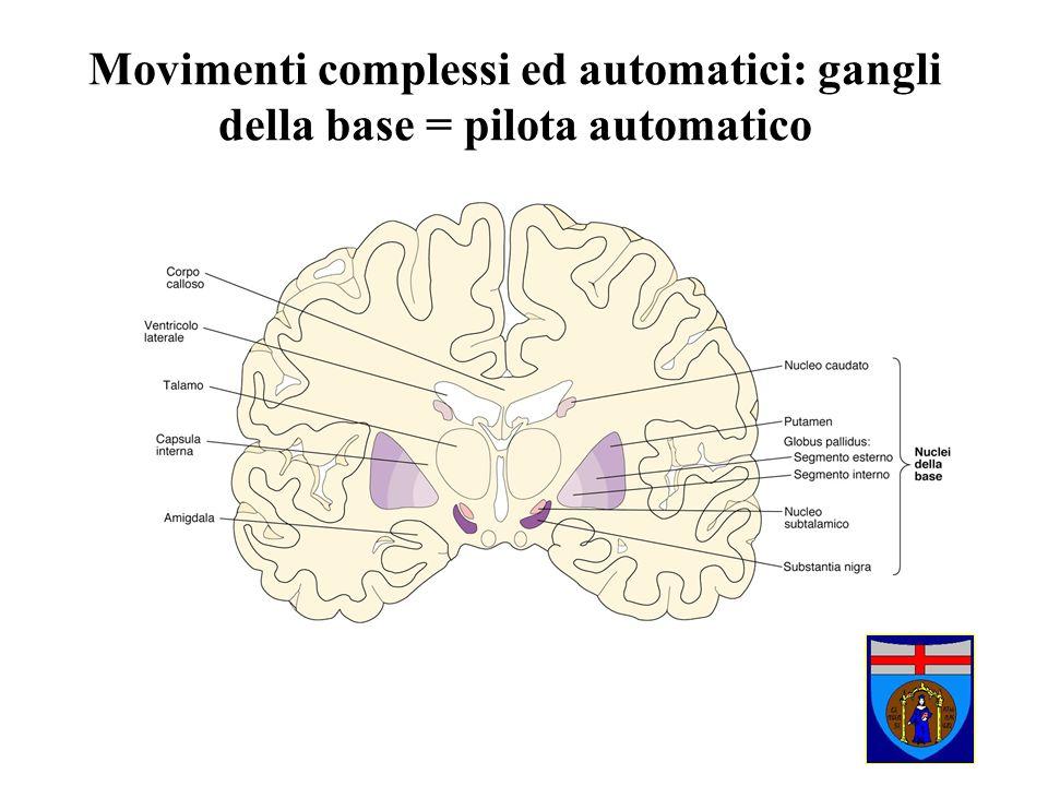 Movimenti complessi ed automatici: gangli della base = pilota automatico