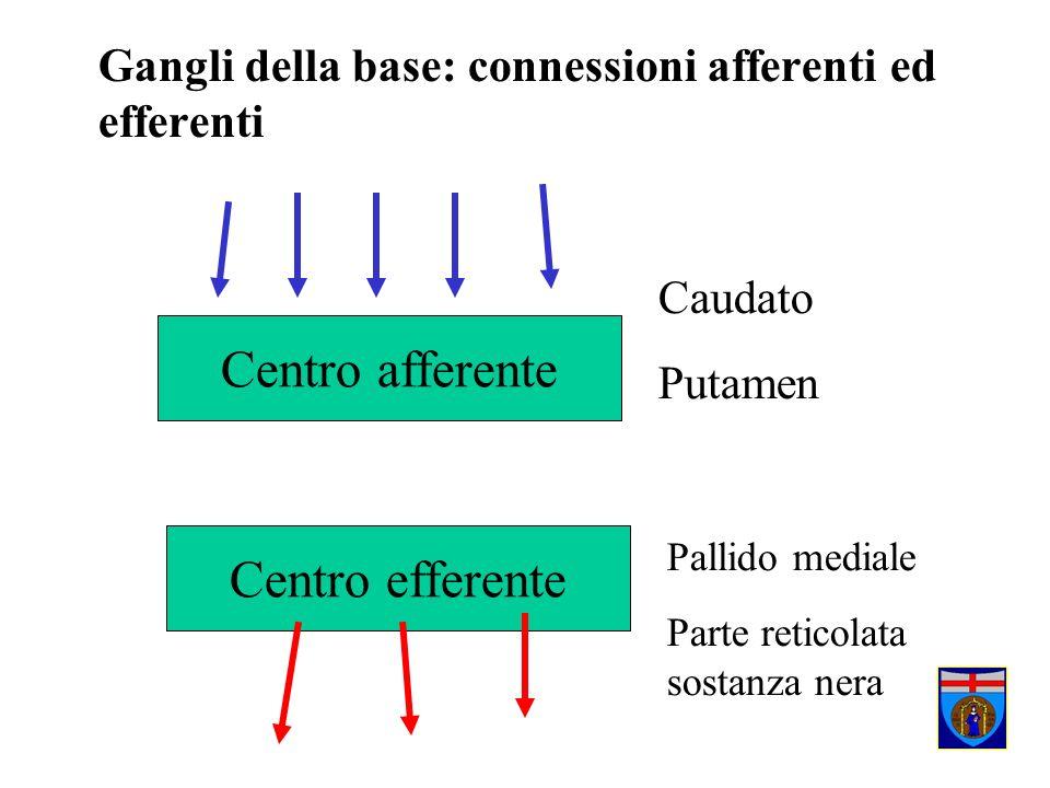 Gangli della base: connessioni afferenti ed efferenti