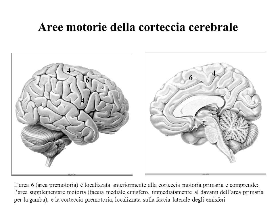 Aree motorie della corteccia cerebrale
