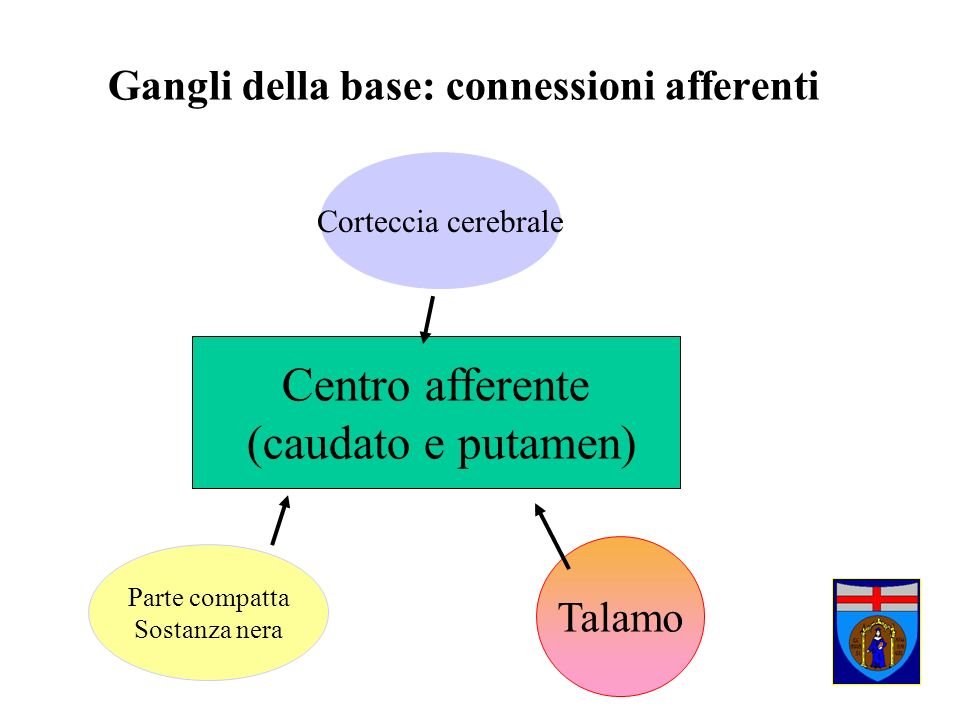 Gangli della base: connessioni afferenti